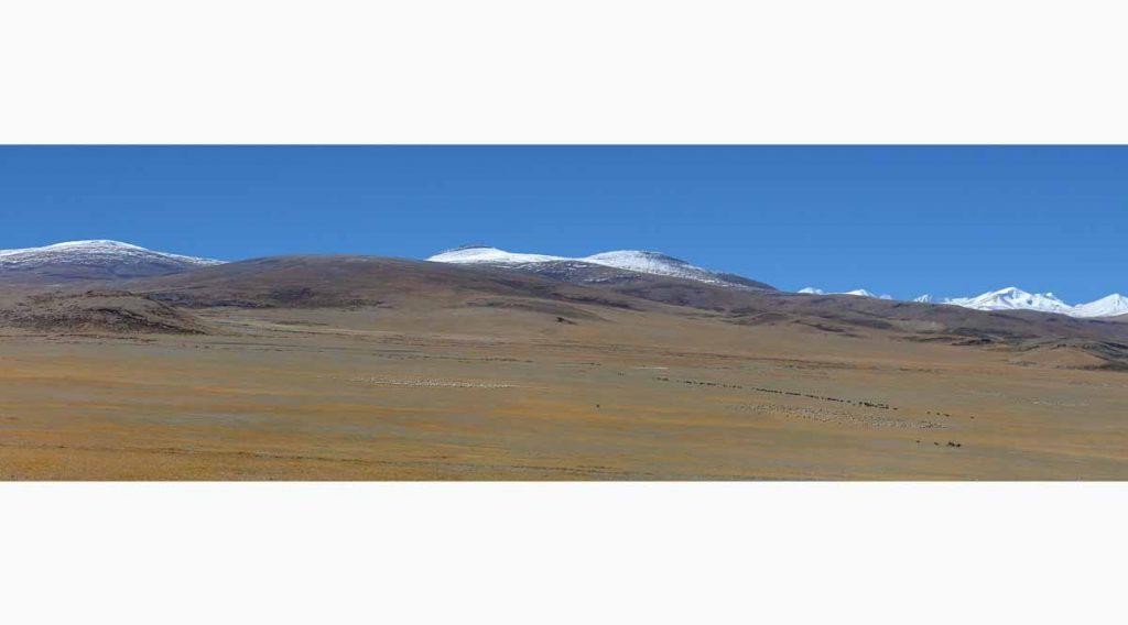 Tibet 3500 animals T2